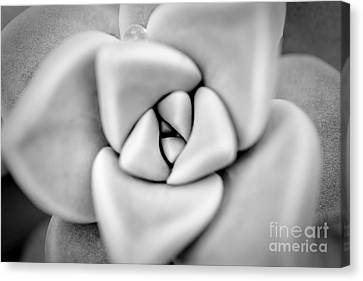 Ghost Petals Canvas Print by Pixel Perfect by Michael Moore