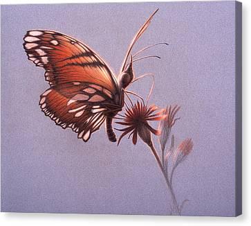 Girawheen Place Of Flowers  Canvas Print by Shawn Kawa