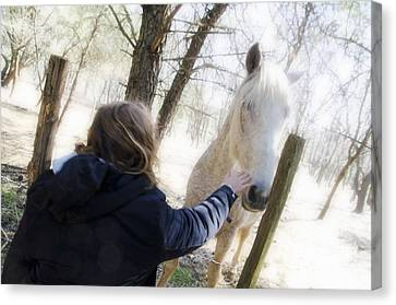 Girl Stroking Camargue Horse At Fence Canvas Print by Sami Sarkis