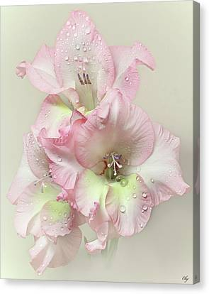 Gladiola Flower With Rain Drops Canvas Print by Flower photography by Viorica Maghetiu