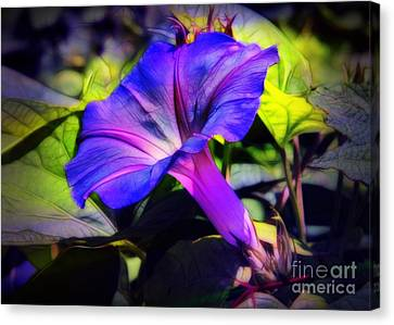 Glory Of The Morning Canvas Print by Judi Bagwell