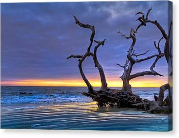 Glowing Sands At Driftwood Beach Canvas Print by Debra and Dave Vanderlaan