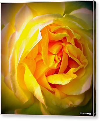 Glowing Canvas Print by Sherry  Kepp