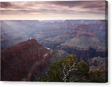 Gnarly Tree In The Canyon Canvas Print by Andrew Soundarajan
