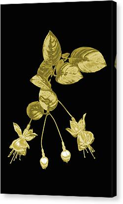 Gold Fuchsia Flowers On A Black Background Canvas Print by Mike Hill