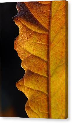 Gold Leaf - The Color Of Autumn Canvas Print by Steven Milner