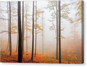 Golden Autumn Forest Canvas Print by Evgeni Dinev