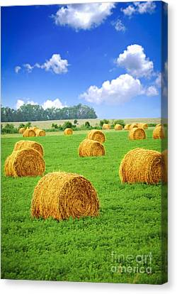 Golden Hay Bales In Green Field Canvas Print by Elena Elisseeva