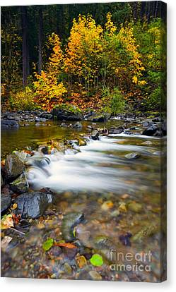 Golden Shores Canvas Print by Mike  Dawson