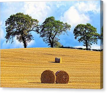 Golden Three Plus Thee Canvas Print by Patrick MacRitchie