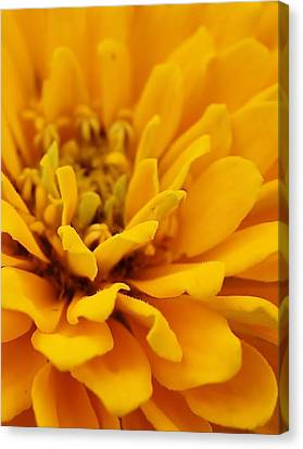 Golden Yellow Burst Canvas Print by Bruce Bley