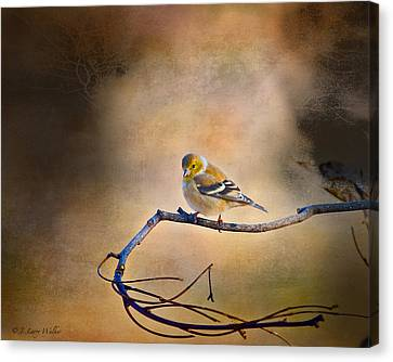 Goldfinch In Deep Thought Canvas Print by J Larry Walker