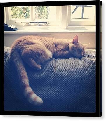 Sofa Canvas Print featuring the photograph Good Choice Cat ;p #cat #pussycat #sofa by Caitlin Hay
