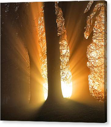 Good Morning Sunshine Canvas Print by Martin Crush