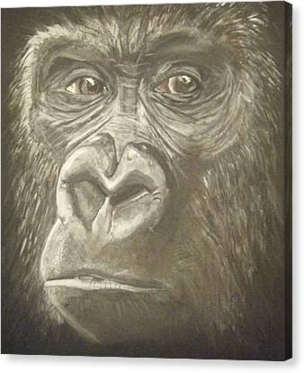 Gorilla Canvas Print by Catherine Eager