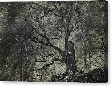 Grabbing Canvas Print by Laurie Search
