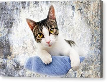 Grand Kitty Cuteness 2 Canvas Print by Andee Design