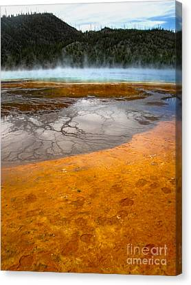 Grand Prismatic Spring Canvas Print by Gregory Dyer