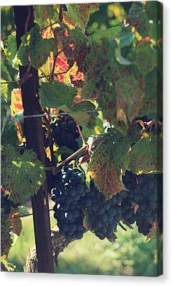 Grapes Canvas Print by Laurie Search