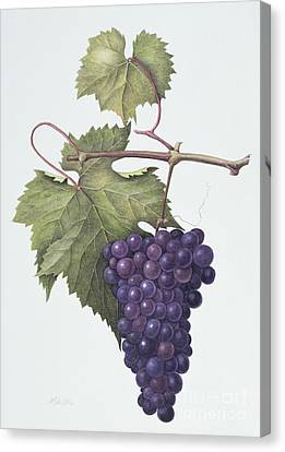 Grapes  Canvas Print by Margaret Ann Eden