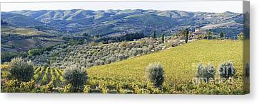 Grapevines And Olive Trees Canvas Print by Jeremy Woodhouse