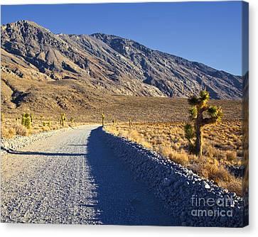Gravel Road In Desert Canvas Print by David Buffington