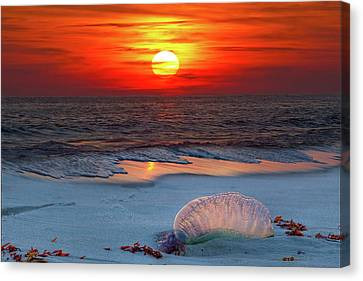 Grayton Beach Sunset IIi Canvas Print by Charles Warren