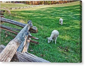 Grazing Farm Animals At Booker T. Washington National Monument Park Canvas Print by James Woody