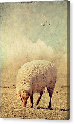 Grazing Sheep Canvas Print by Kathy Jennings