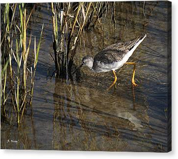 Greater Yellowlegs At Spi Canvas Print by Roena King