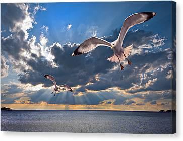 Greek Gulls With Sunbeams Canvas Print by Meirion Matthias