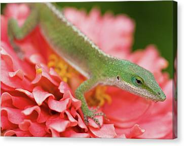 Green And Pink In Garden Canvas Print by Jeff R Clow