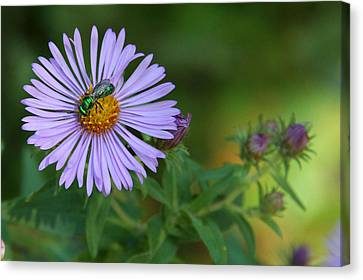 Green And Purple Canvas Print by Doris Potter