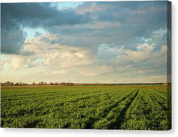 Green Field With Clouds Canvas Print by Topher Simon photography