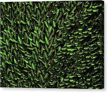 Green Leaf Canvas Print by David Dehner