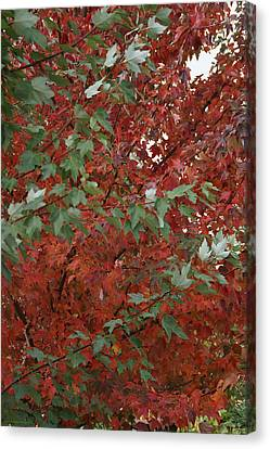 Green Leaves Against Red Leaves Canvas Print by Mick Anderson