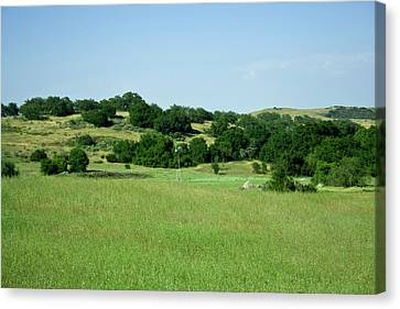 Green Meadow Canvas Print by Terry Thomas