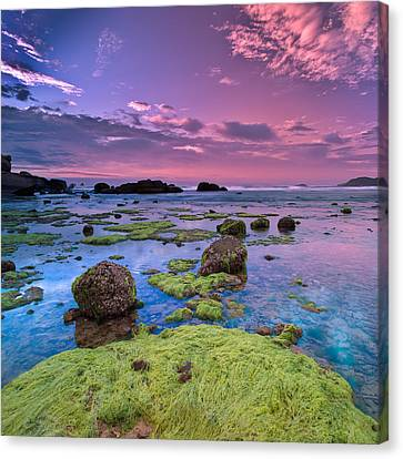 Green Moss Covered Rocks At Sunrise Canvas Print by AndreLuu