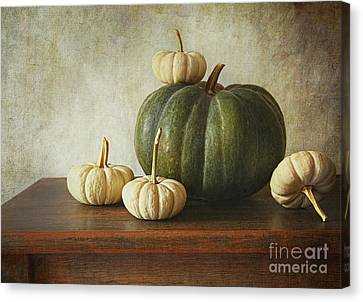 Green Pumpkin And Gourds On Table  Canvas Print by Sandra Cunningham