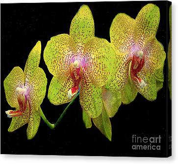 Green Spotted Orchids Canvas Print by Merton Allen