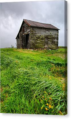 Grey County Barn Canvas Print by Cale Best
