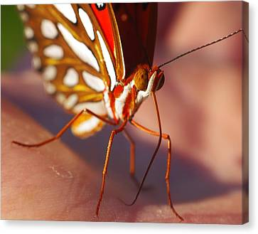 Gulf Fritillary Canvas Print by Billy  Griffis Jr