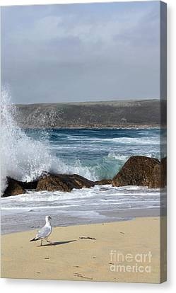 Gull On The Sand Canvas Print by Linsey Williams