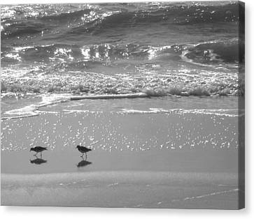 Gulls Taking A Walk Canvas Print by Cindy Lee Longhini