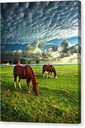 Hailey's Horses Canvas Print by Phil Koch