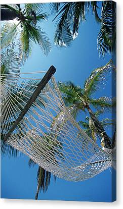 Hammock And Palm Tree, Great Barrier Canvas Print by Ron Watts