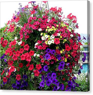 Hanging Basket Canvas Print by Will Borden