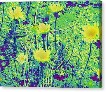 Happy Desert Daisies Canvas Print by Claire Plowman