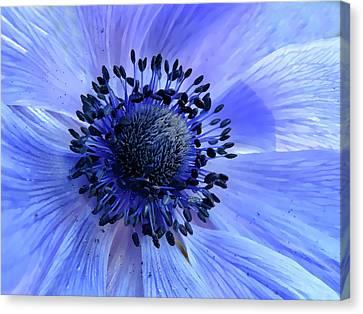 Harmony Blue Canvas Print by Mim Eisenberg