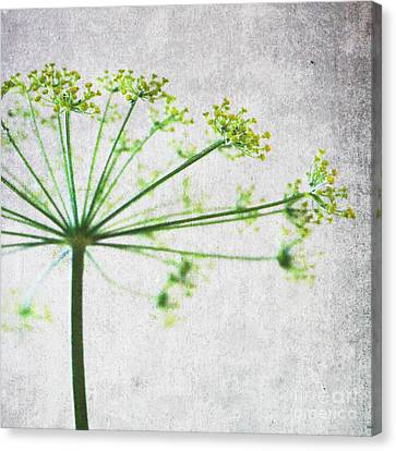 Harvest Starbust 3 Canvas Print by Linda Woods
